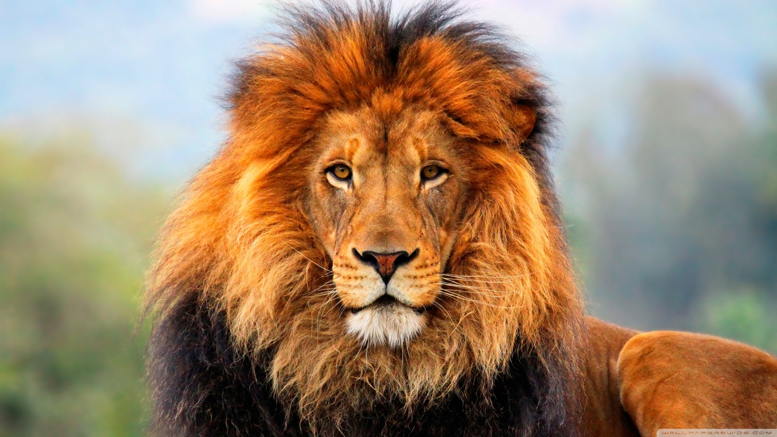 "The Lion, long considered the ""king of beasts,"" rules the sky from July 23 to August 23."